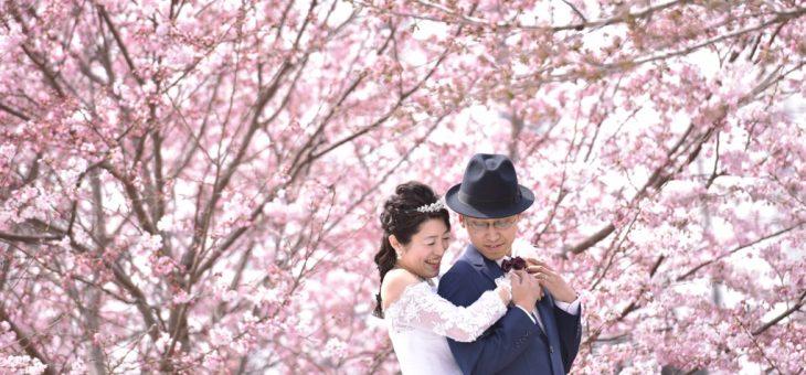 桜で前撮り