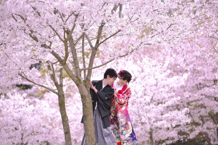 桜や菜の花畑で和装の洋髪で白無垢や色打掛けで髪型やヘアスタイル、髪飾りも写っている結婚式の前に別日で撮影してる前撮りのロケーションフォトの写真