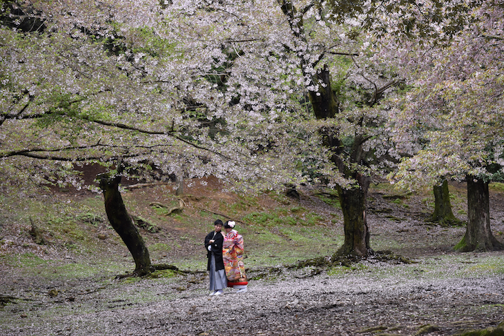 ソメイヨシノや遅咲きの桜での前撮りロケフォト写真