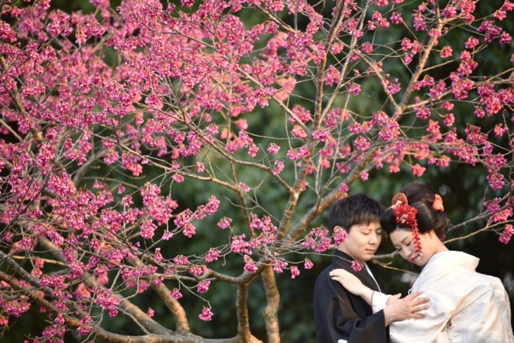 桜と菜の花で奈良で結婚式の和装の前撮りを地毛の日本髪の写真