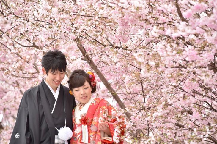 菜の花畑と満開の桜の季節に赤い色打掛けで洋髪の髪型ヘアスタイルの可愛い髪飾りの和装前撮りロケフォトの写真
