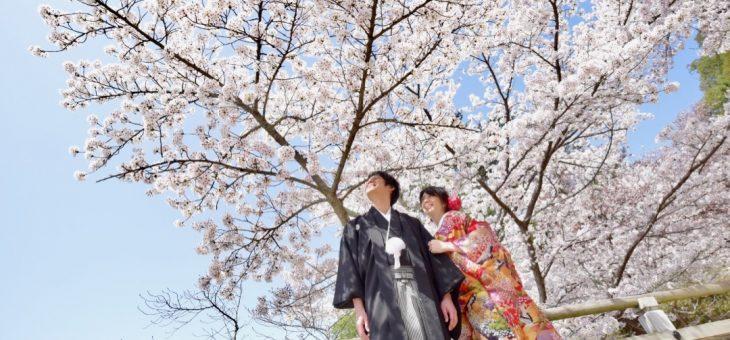 滋賀県から桜の前撮り