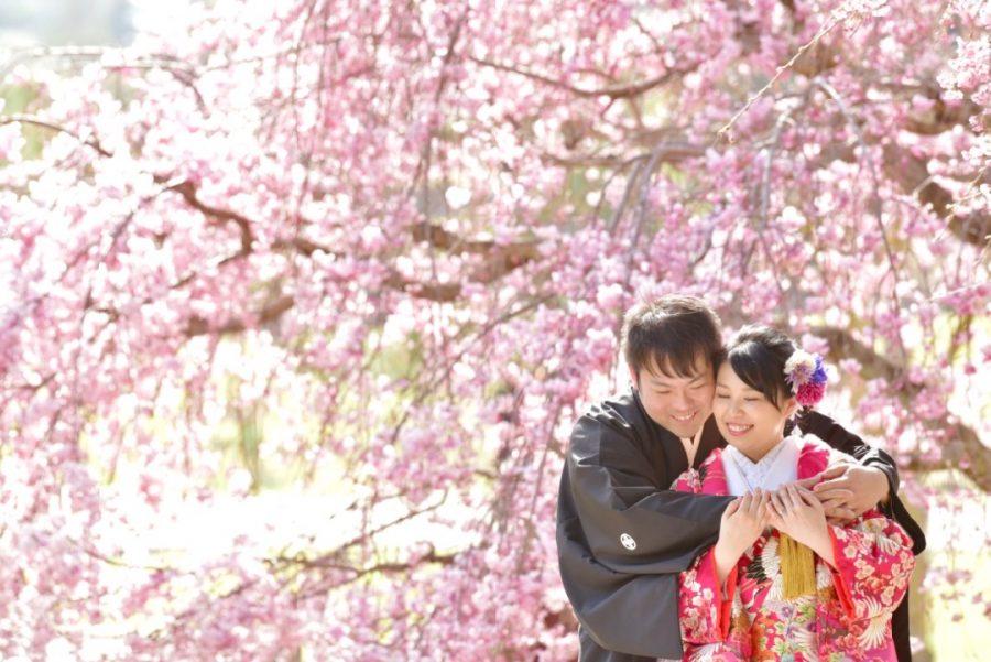 結婚式の前撮りを奈良の桜での写真
