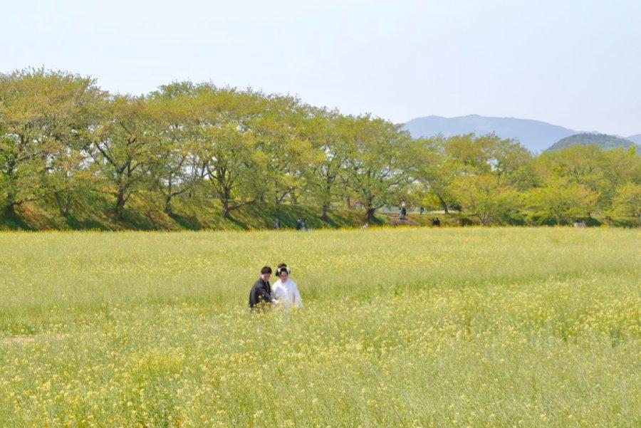 桜と菜の花の前撮りを地毛で日本髪の写真