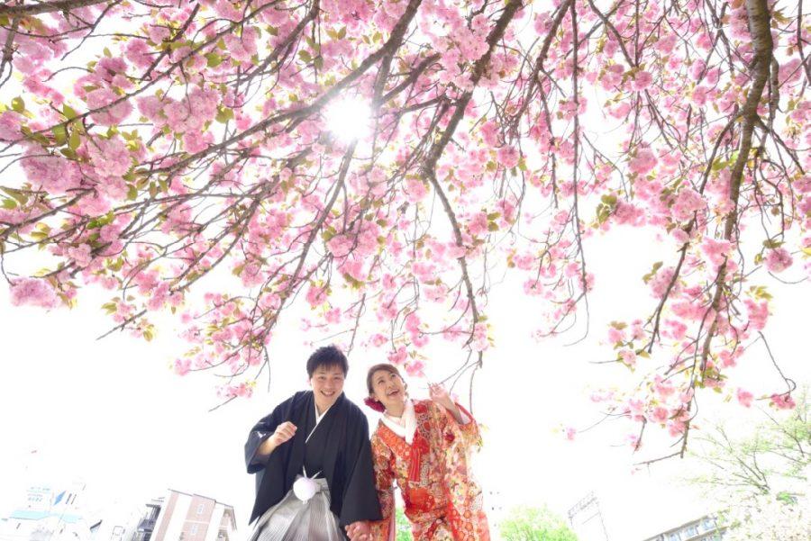奈良の桜で前撮りを洋髪ヘアスタイルの写真