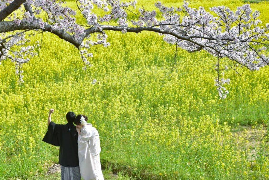 奈良の結婚式の前撮り和装で桜の菜の花の写真