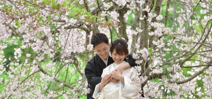 桜と菜の花の前撮り