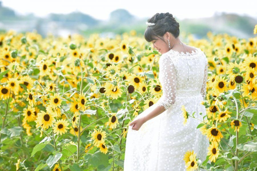ひまわり畑で結婚式の前撮り