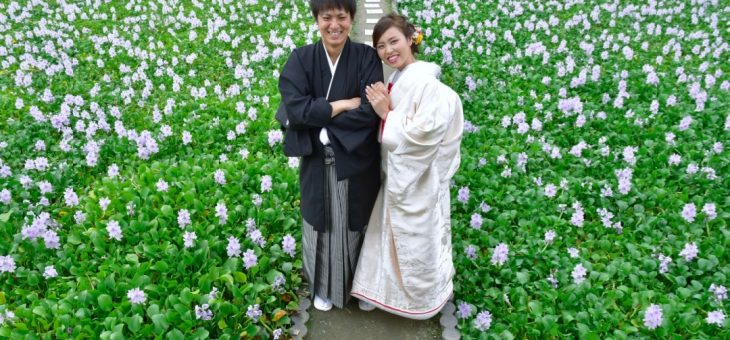 コスモスと本薬師寺跡で前撮り(2018.9.25)