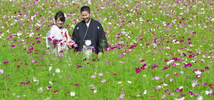 新潟と島根の2人が9月のコスモスで和装の前撮り
