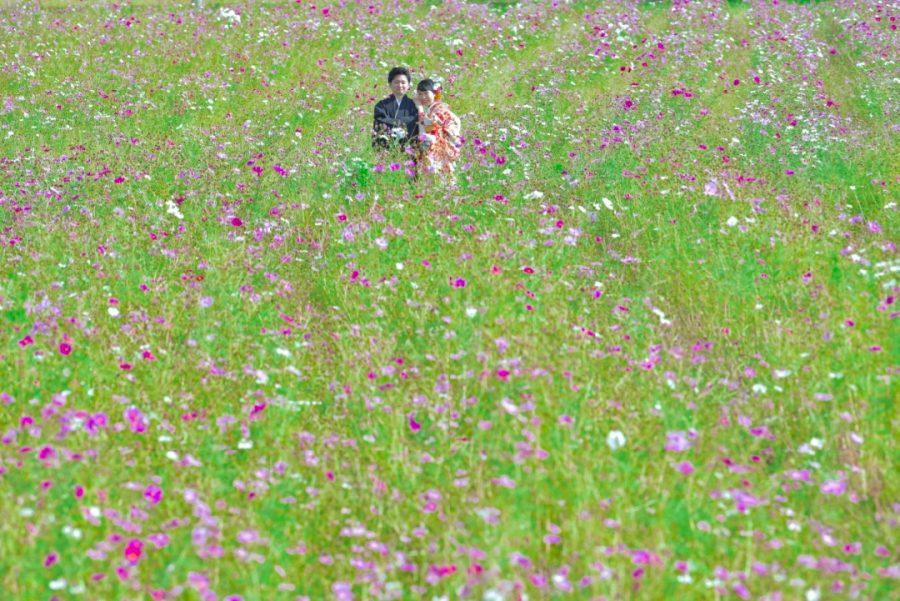 結婚式の前撮りを紅葉の奈良公園とコスモスの撮影