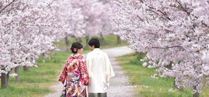 前撮りの桜