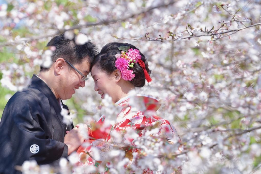 白無垢で洋髪の髪型で菜の花と桜での前撮り撮影