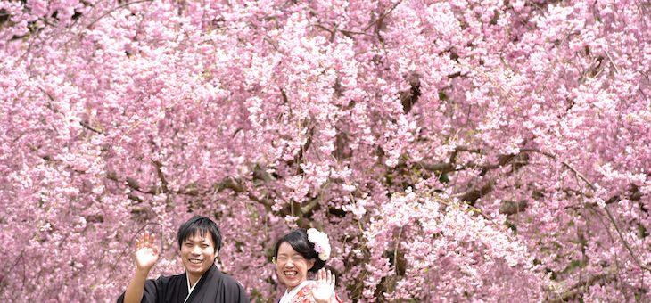桜で前撮り予約状況