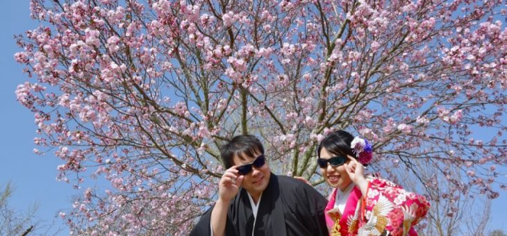 滋賀から桜の前撮り