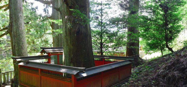 天一神社で広告用撮影
