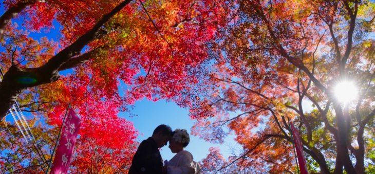 紅葉の吉野山、吉水神社の結婚式